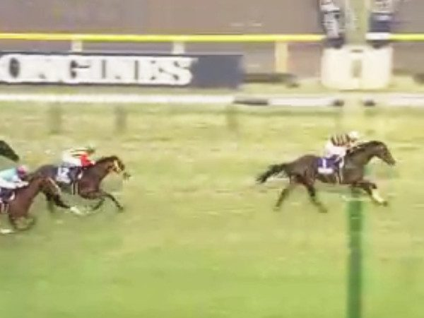 36回ジャパンカップ優勝馬キタサンブラック
