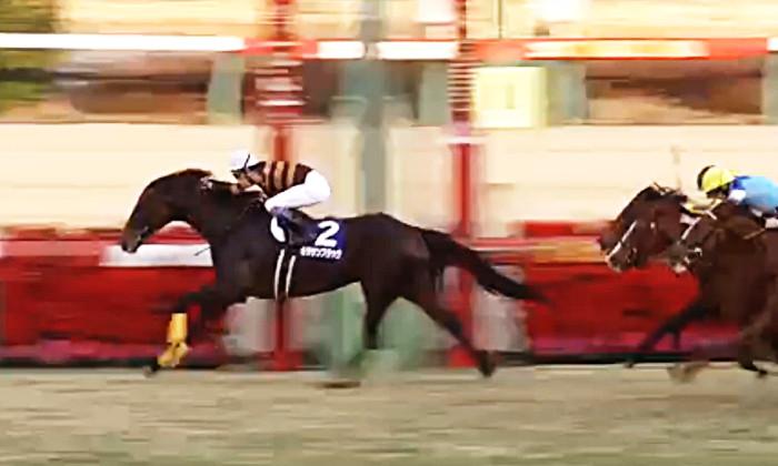 2017年 有馬記念 優勝馬キタサンブラック